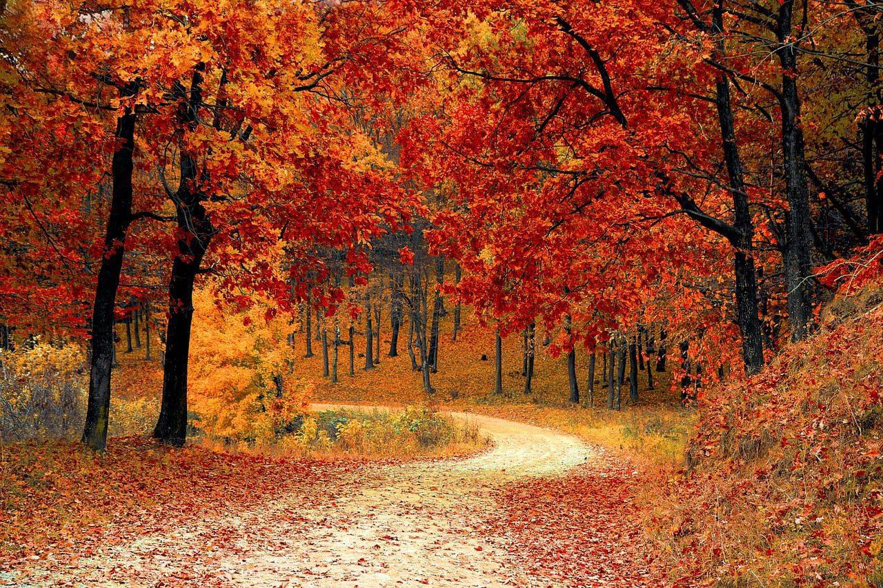 Tips om in beweging te komen in de herfst